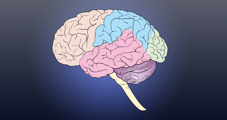 img conferences cerveau 754x400 1
